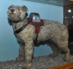 Railway Collecting Dog \