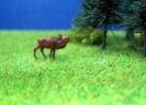 deer \