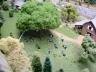 New Shade tree for the farm animals