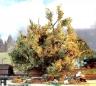 Selfmade tree