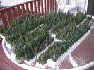 Hand Made Evergreens