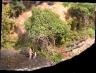 reworked trestle