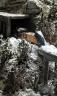 Rio Grande Snowplow