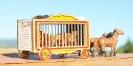 SBD Circus Wagons